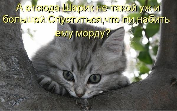 Смешные картинки котов с надписями - смотреть бесплатно 3