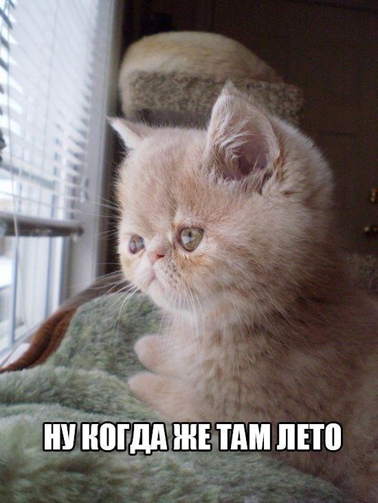 Смешные картинки котов с надписями - смотреть бесплатно 4