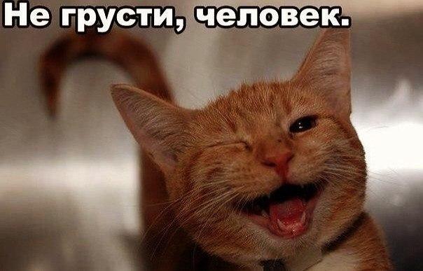 Смешные картинки котов с надписями - смотреть бесплатно 5