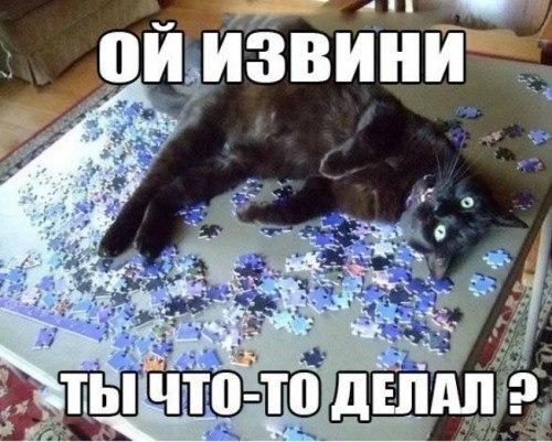 Смешные картинки с животными с надписями - смотреть бесплатно 17