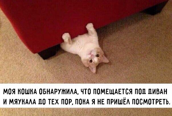 Смешные картинки с животными с надписями - смотреть бесплатно 4