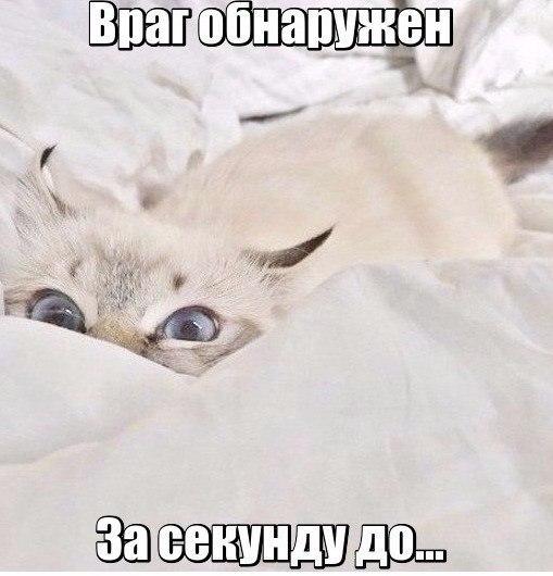 Смешные картинки с животными с надписями - смотреть бесплатно 6