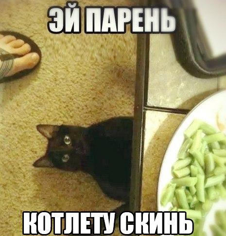 Смешные картинки с животными с надписями - смотреть бесплатно 7