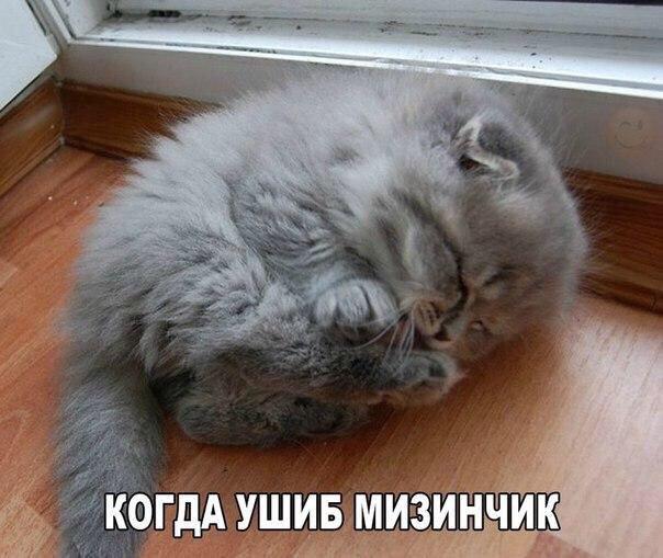 Смешные картинки с надписями до слез - скачать бесплатно 11