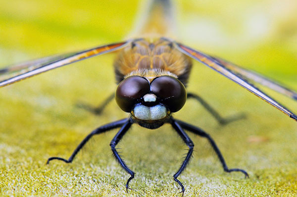 Смотреть картинки про животных бесплатно - красивые, удивительные 14