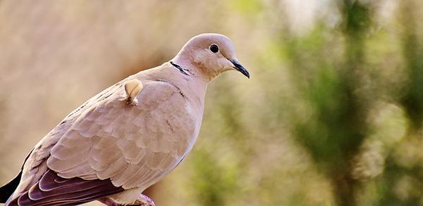 Смотреть картинки про животных бесплатно - красивые, удивительные 16