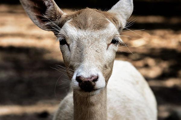 Смотреть картинки про животных бесплатно - красивые, удивительные 4