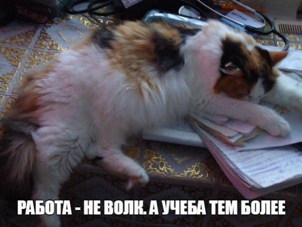 Смотреть смешные картинки про животных бесплатно, до слез 10