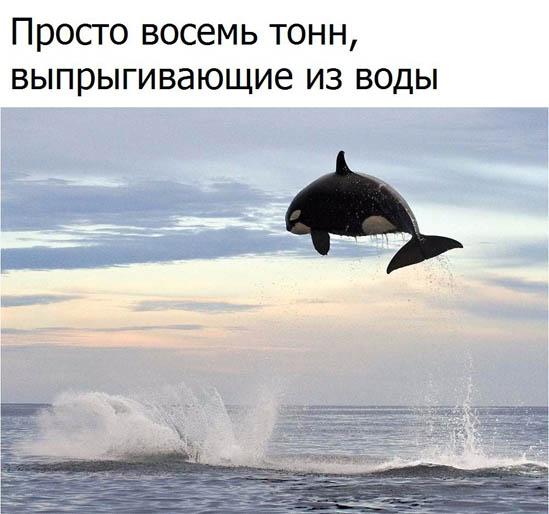 Смотреть смешные картинки про животных бесплатно, до слез 13