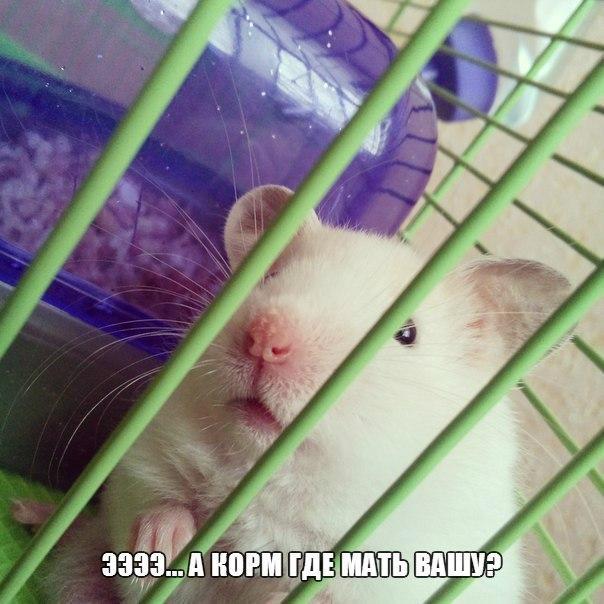 Смотреть смешные картинки про животных бесплатно, до слез 14