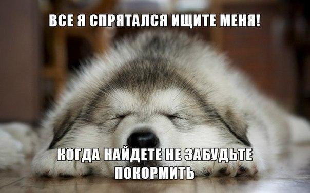 Смотреть смешные картинки про животных бесплатно, до слез 2