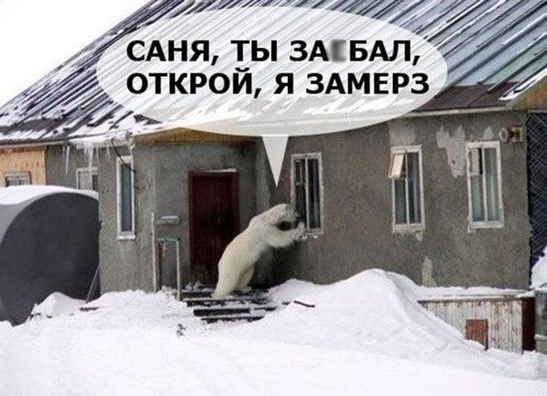 Смотреть смешные картинки про животных бесплатно, до слез 3