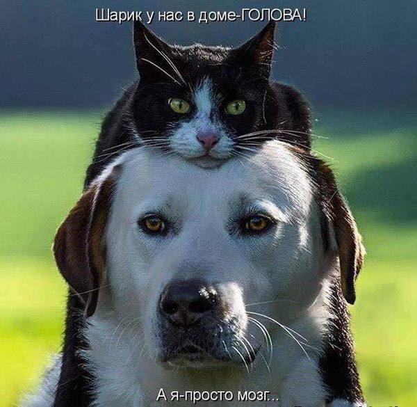 Смотреть смешные фото про животных до слез, с надписями 10