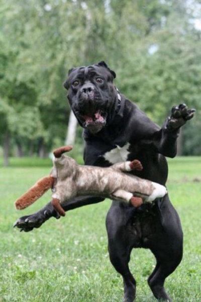 Смотреть смешные фото про животных до слез, с надписями 11
