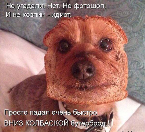 Смотреть смешные фото про животных до слез, с надписями 12