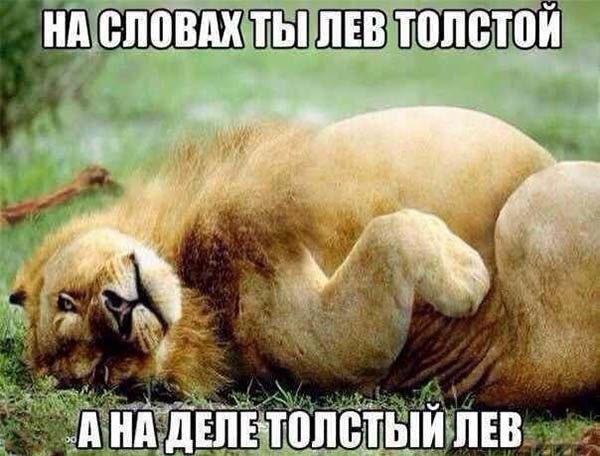 Смотреть смешные фото про животных до слез, с надписями 14