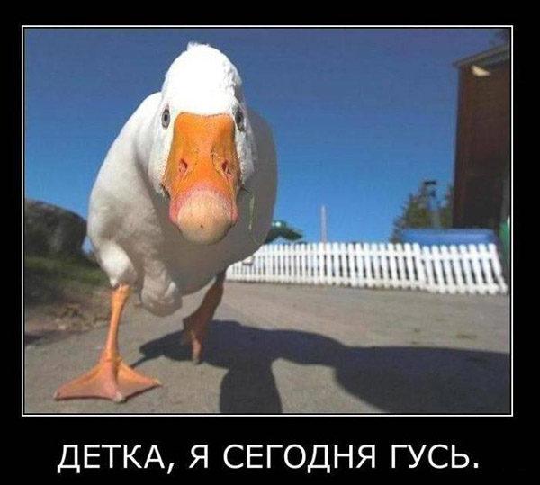 Смотреть смешные фото про животных до слез, с надписями 16