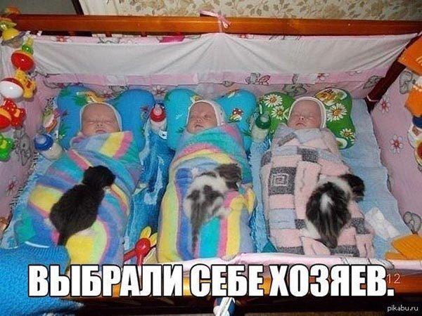Смотреть смешные фото про животных до слез, с надписями 2