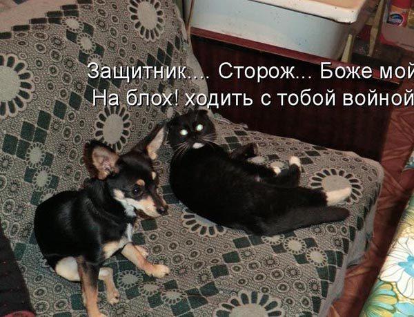 Смотреть смешные фото про животных до слез, с надписями 3