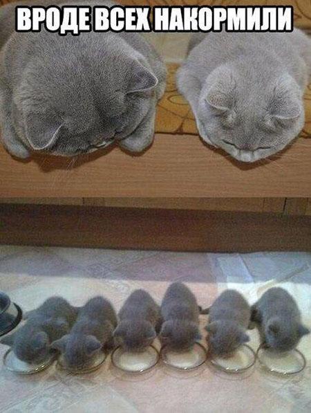 Смотреть смешные фото про животных до слез, с надписями 8