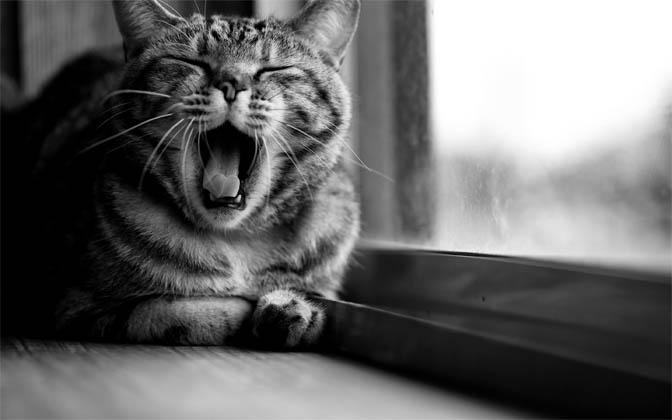 Черно-белые картинки котов, красивые коты - фото черно-белые 11