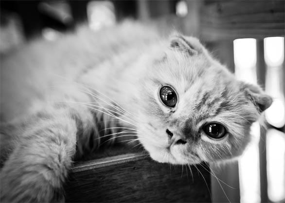 Черно-белые картинки котов, красивые коты - фото черно-белые 13
