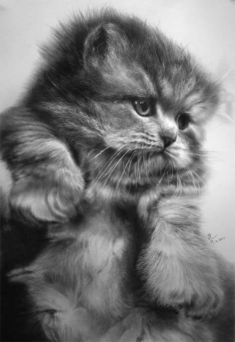 Черно-белые картинки котов, красивые коты - фото черно-белые 2
