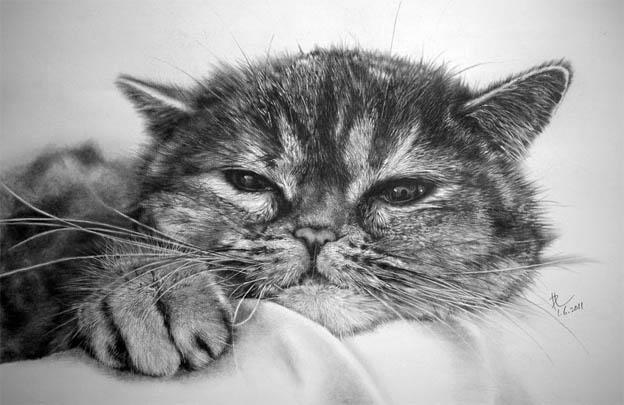 Черно-белые картинки котов, красивые коты - фото черно-белые 3