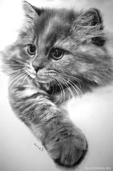 Черно-белые картинки котов, красивые коты - фото черно-белые 5