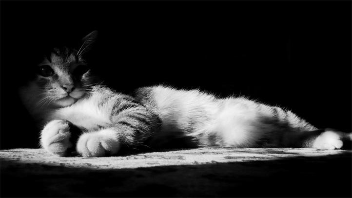 Черно-белые картинки котов, красивые коты - фото черно-белые 7
