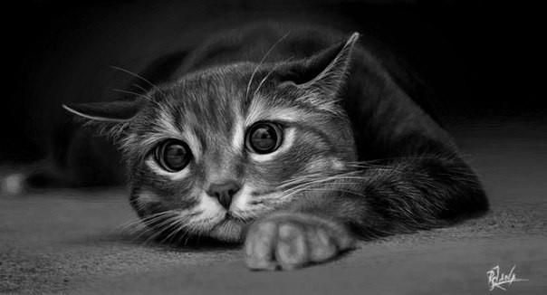 Черно-белые картинки котов, красивые коты - фото черно-белые 9