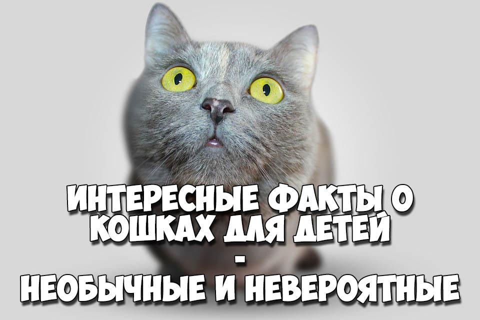 Интересные факты о кошках для детей - необычные и невероятные 1