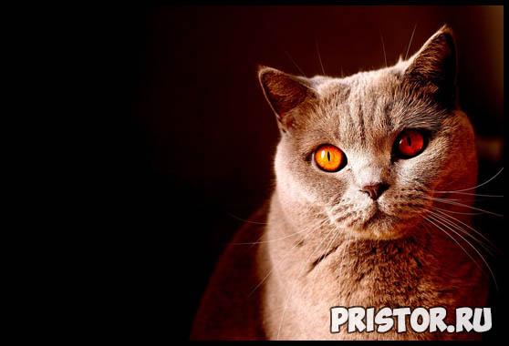 Интересные факты о кошках для детей - необычные и невероятные 2