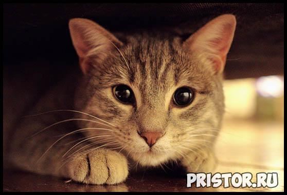 Интересные факты о кошках для детей - необычные и невероятные 4