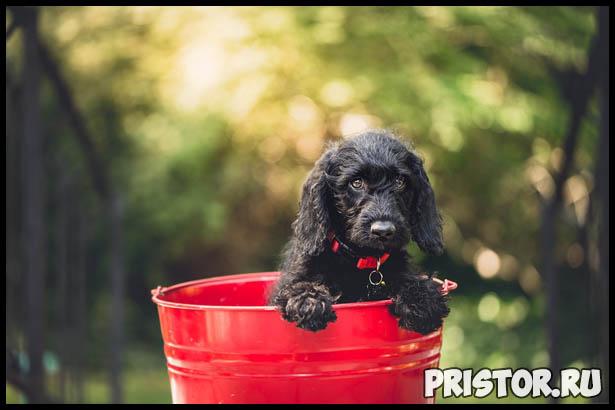 Интересные факты про собак для детей - удивительные и невероятные 1