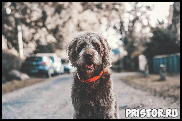 Интересные факты про собак для детей - удивительные и невероятные 2