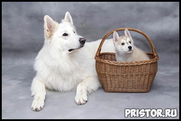 Интересные факты про собак для детей - удивительные и невероятные 3