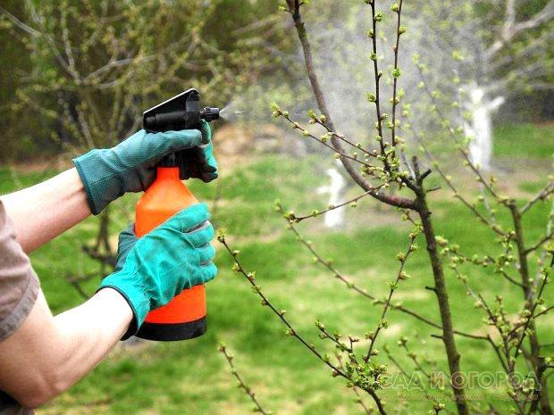 Как развести известь для побелки деревьев - руководство 3