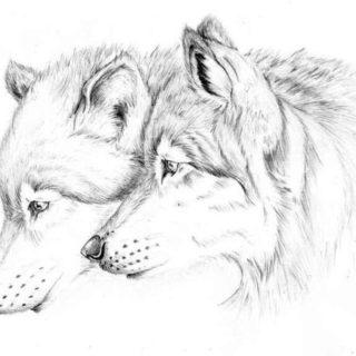 Как рисовать шерсть или мех животных - советы для начинающих 2