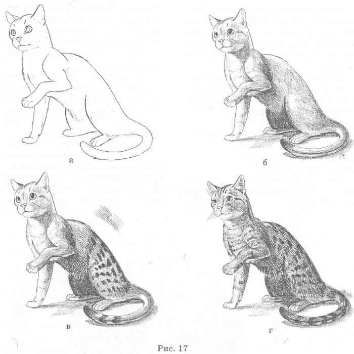 Как рисовать шерсть или мех животных - советы для начинающих 7