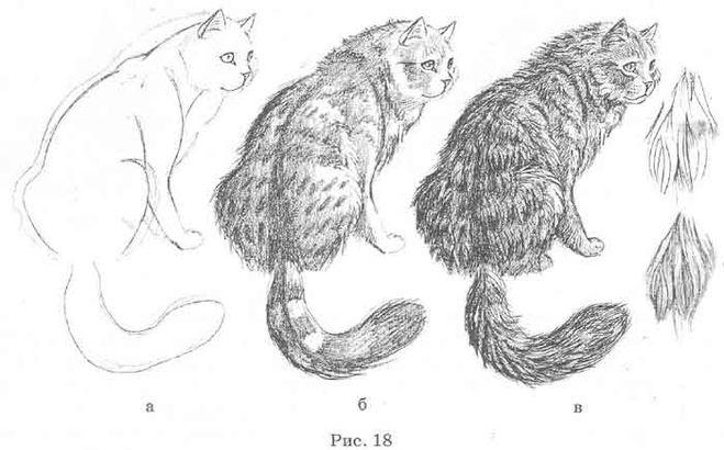Как рисовать шерсть или мех животных - советы для начинающих 8