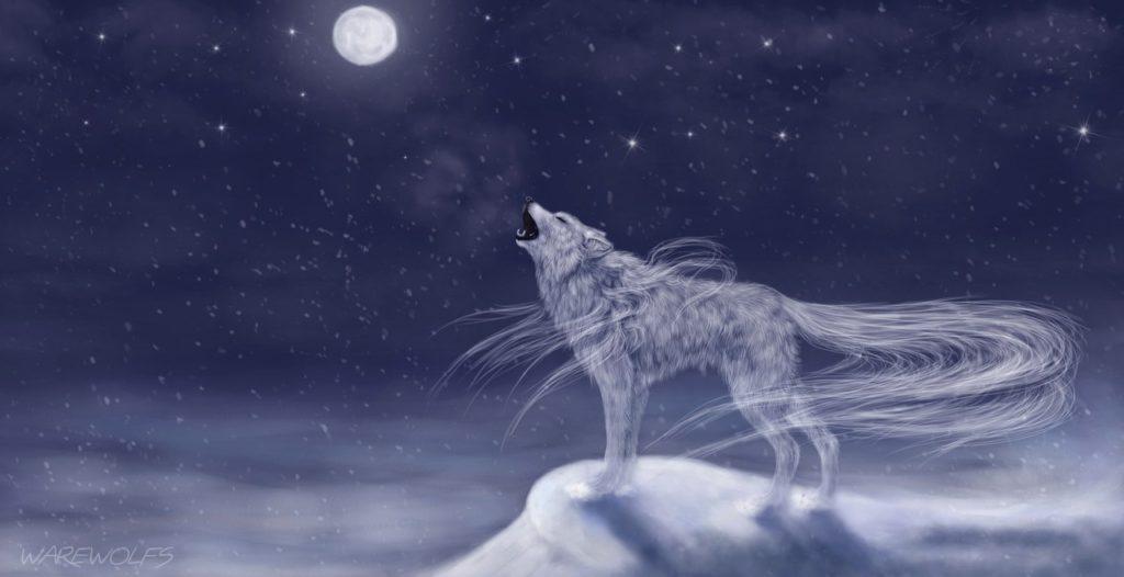 Картинки волков - скачать, смотреть, красивые, прикольные 6