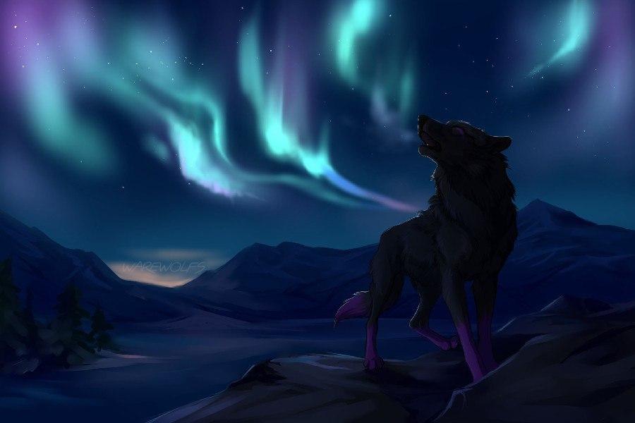 Картинки волков - скачать, смотреть, красивые, прикольные 7