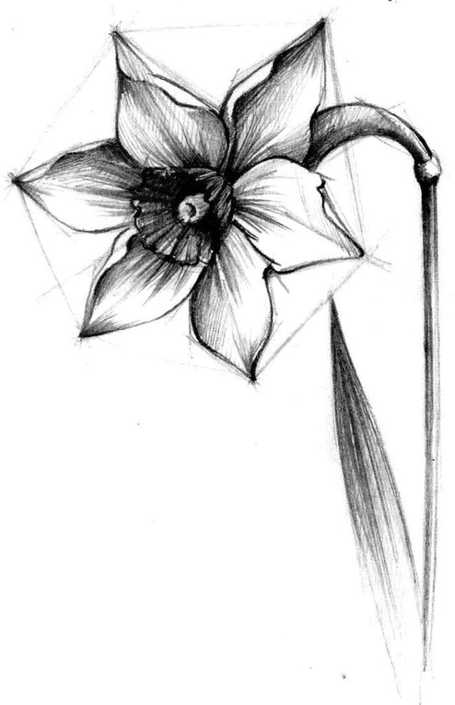 Красивые картинки карандашом для срисовки - новые, свежие 1