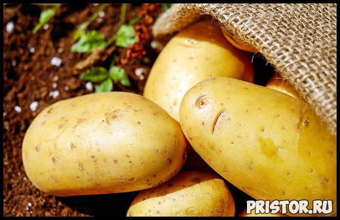 Можно ли есть проросшую картошку Картофель и здоровье человека 1