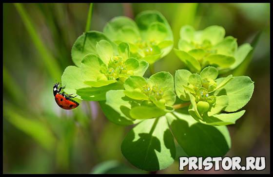 Приспособленность и среда обитания насекомых 1