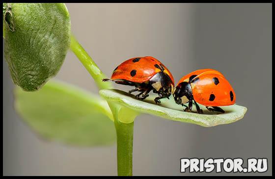 Приспособленность и среда обитания насекомых 2