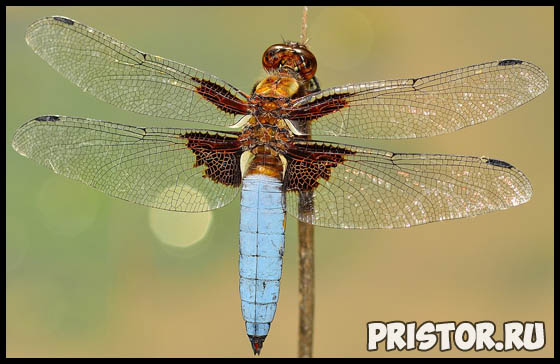 Приспособленность и среда обитания насекомых 3