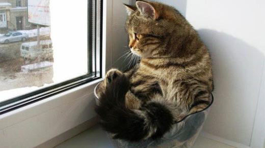 Свежие и новые картинки смешных животных - смотреть подборку 12