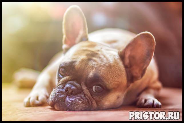 Сколько раз в день нужно кормить собаку Режим питания для собаки 3